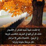Rasa Kehilangan Ibarat Pohon di Musim Gugur